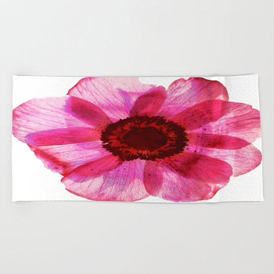 Fragile and beautiful - red anemone in white background Beach Towel