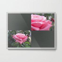 Pink Roses in Anzures 6 Blank Q6F0 Metal Print