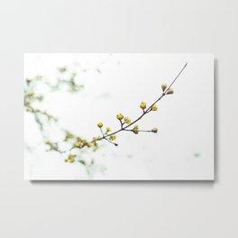 YELLOW FLOWER BUDS IN TILT SHIFT LENS Metal Print