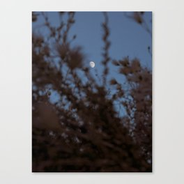Evening Woes Canvas Print