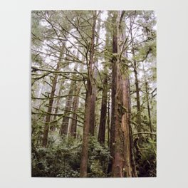 Tree Arms Poster