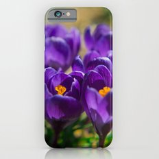 Spring Colors  iPhone 6s Slim Case