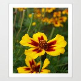 Yellow Marigold Flowers Art Print