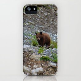 Black bear cub in Jasper National Park   Alberta iPhone Case