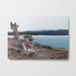 weathered tree by blue frozen lake Metal Print