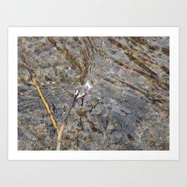 Natures Flow Art Print