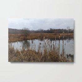 Willows Metal Print