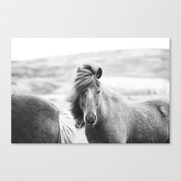 Horse Photograph in Iceland Canvas Print