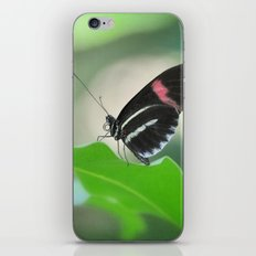 Butterfly garden iPhone & iPod Skin