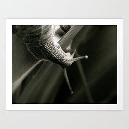 Snail Love  (London & Travel) Art Print