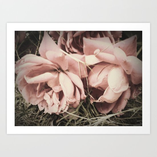 old time roses Art Print