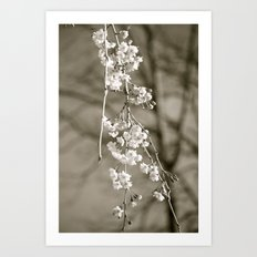 Stages of Spring Art Print