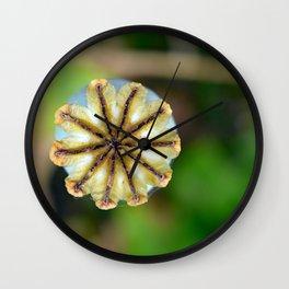 Poppy seed pod. Wall Clock