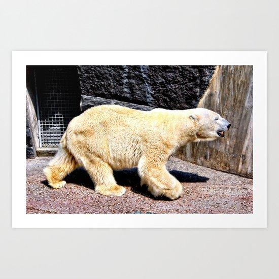 Polar bear at the Zoo Art Print