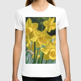 Daffodils in a field T-shirt