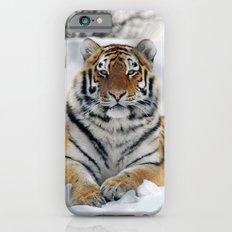 Tiger in snow iPhone 6s Slim Case