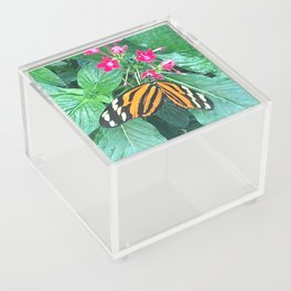Butterfly on Plant Acrylic Box