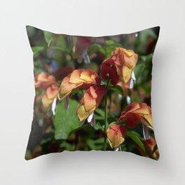Shrimp Plant - Justicia brandegeana Throw Pillow