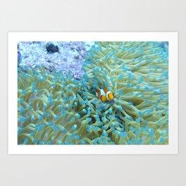 Scared little clownfish Art Print