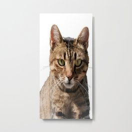 Portrait Of A Cute Tabby Cat With Direct Eye Contact Isolated Metal Print