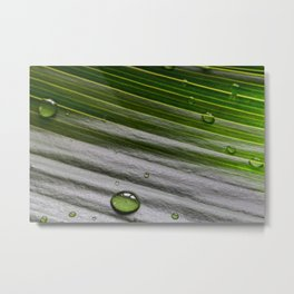 Close-up of green plant leaf with water drops Metal Print