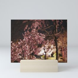 Weeping Cherry Blossoms Mini Art Print