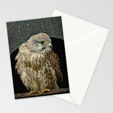 Young Kestrel in a broken window Stationery Cards