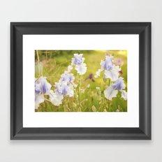 Dreamy Iris Framed Art Print
