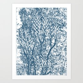 Real Old Blue Kangaroo Paws Art Print