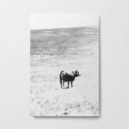 Cow No. 004 Metal Print