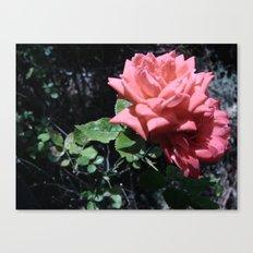 Flowers #16 Canvas Print