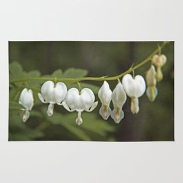 White Bleeding Hearts with Green Rug