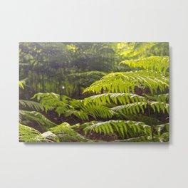 Beauty of plants Metal Print
