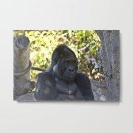 Gorilla Metal Print