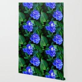 Three Hydrangea Blossoms Wallpaper