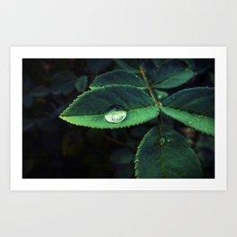Raindrop on leaf  Art Print