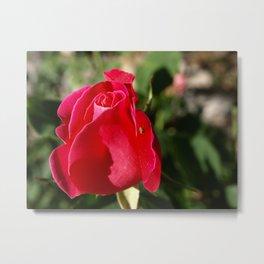 """""""Rose Bug"""" Metal Print"""
