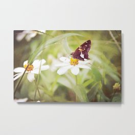 Brown Butterfly on White Flower Metal Print