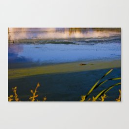 Pastel Muskrat  Canvas Print
