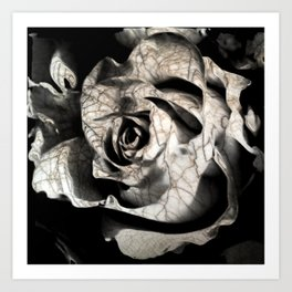 Rose forming from light and shadows Art Print