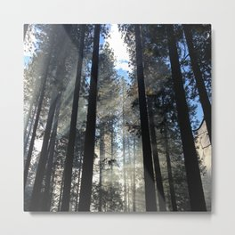 Sunlight Shines Through the Trees Metal Print