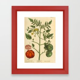 """Tomato by Elizabeth Blackwell from """"A Curious Herbal,"""" 1737 (benefiting The Nature Conservancy) Framed Art Print"""