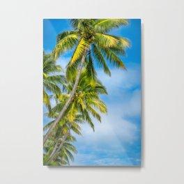 Looking up at some beautiful coconut palm trees at Kuto Bay. Metal Print