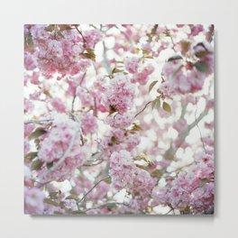 Blossoms #02 Metal Print