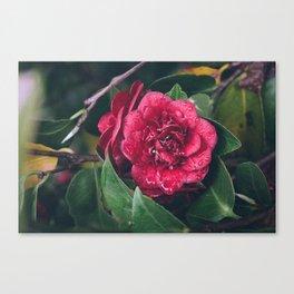 Spring rains Canvas Print