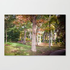 Trees at Wellesley  Canvas Print