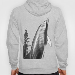 Black and white dolphins Hoody