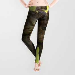 Desert Bighorn Rams 4299 - Closeup Leggings