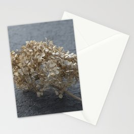 Blossoms on Blacktop Stationery Cards