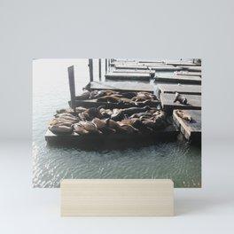 Sealions at the Bay, San Francisco, California Mini Art Print